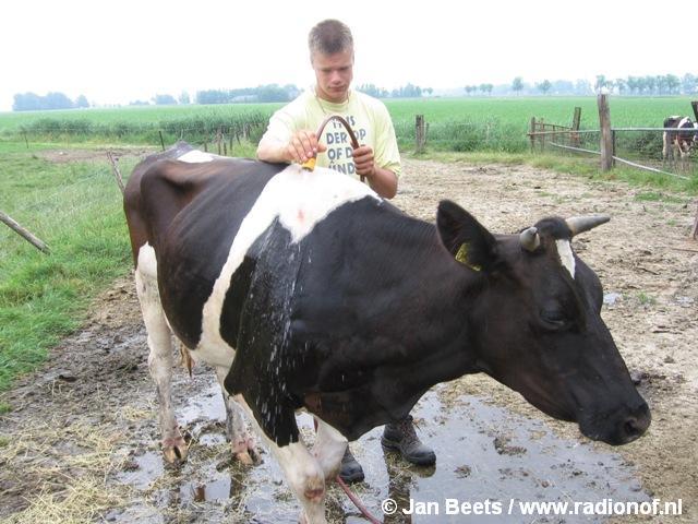 Brandweer red koe uit Melkput