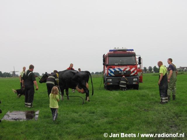 Brandweer Kollum helpt koe uit de sloot