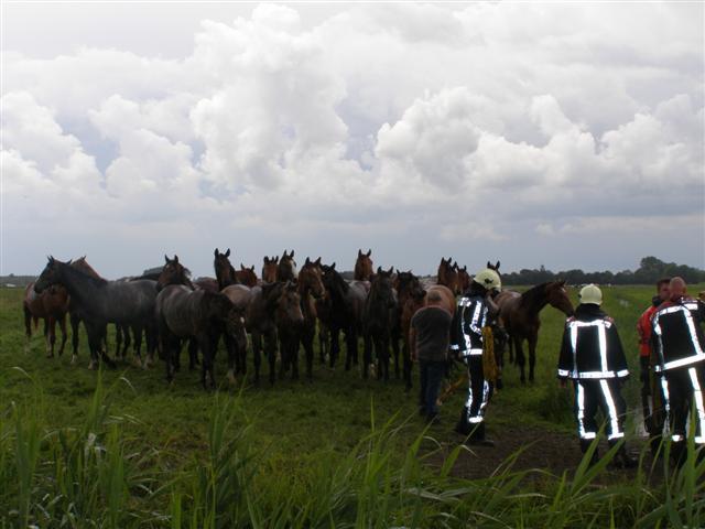 Paard te water in Leeuwarden