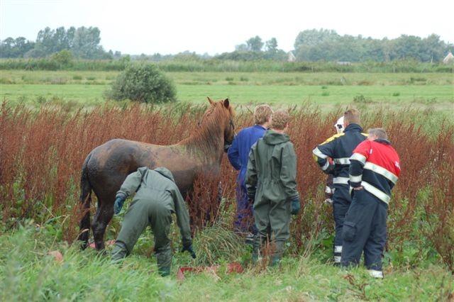 Brandweer redt twee paarden