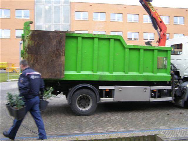 Hennepkwekerij in Leeuwarden