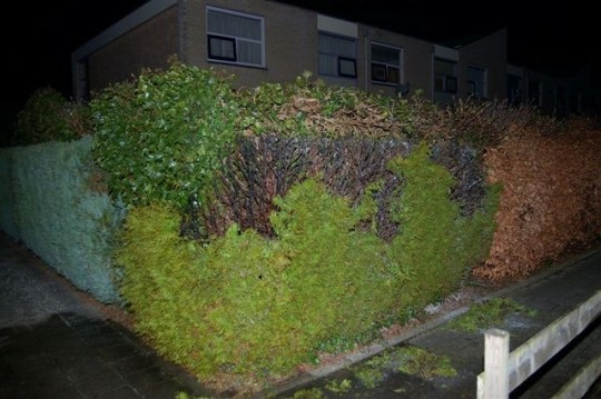 Drachten: Coniferen brand (Foto)
