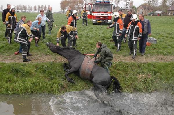 Paard in sloot witmarsum