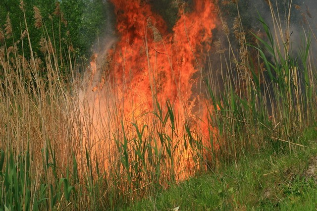 Forse buitenbrand
