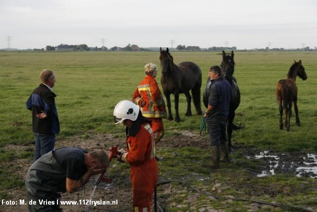 Paard te water in Dronrijp