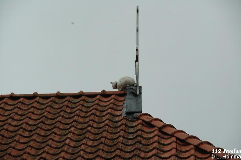 Kat op het dak