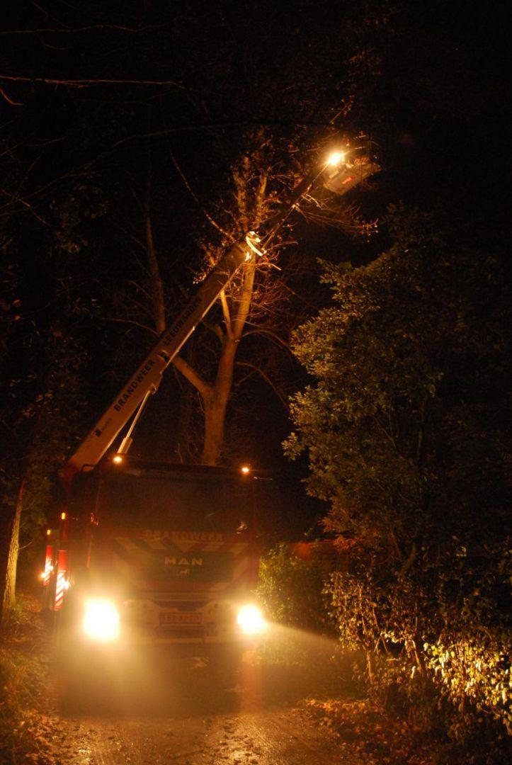 Ara bevrijd uit boom