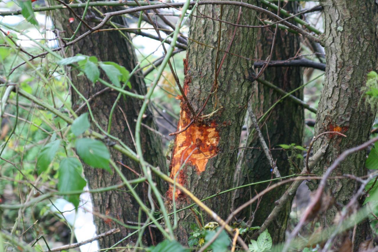 Man gewond na botsing met boom