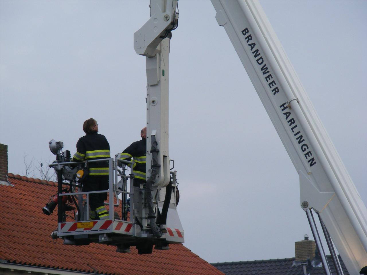 Meeuw vast op dak