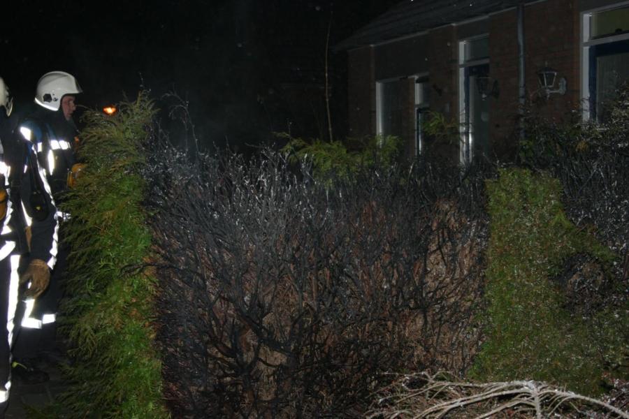 Coniferen in brand door vuurwerk