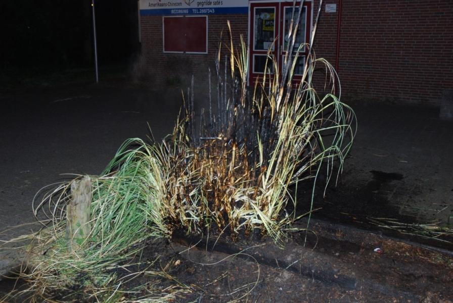 Rietplant in brand