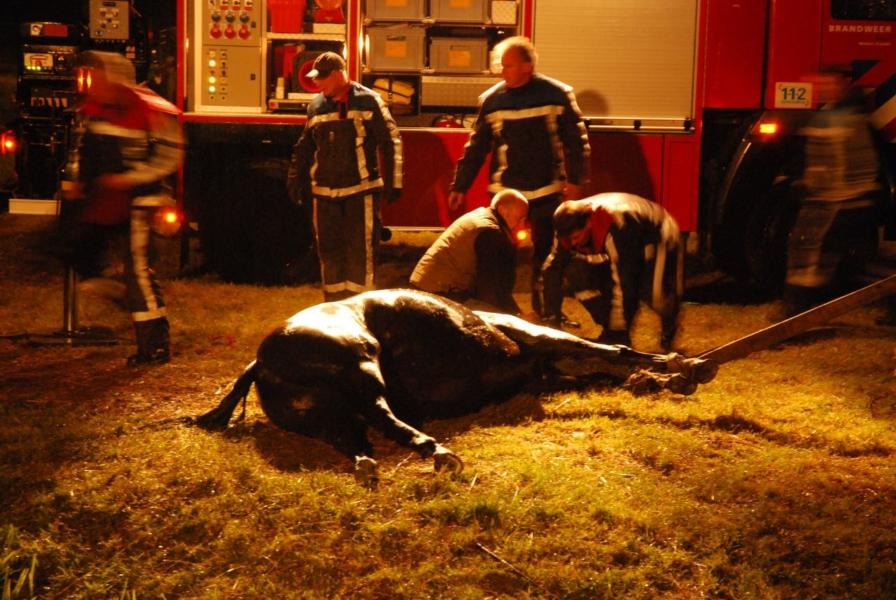 Paard uit sloot gered *video update*