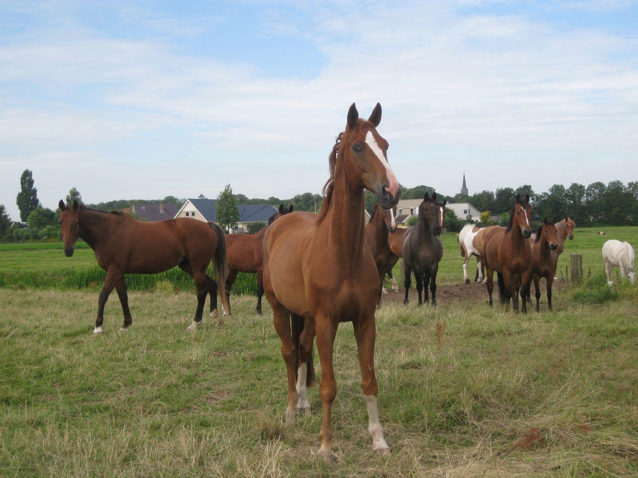 Paard snel uit sloot getrokken