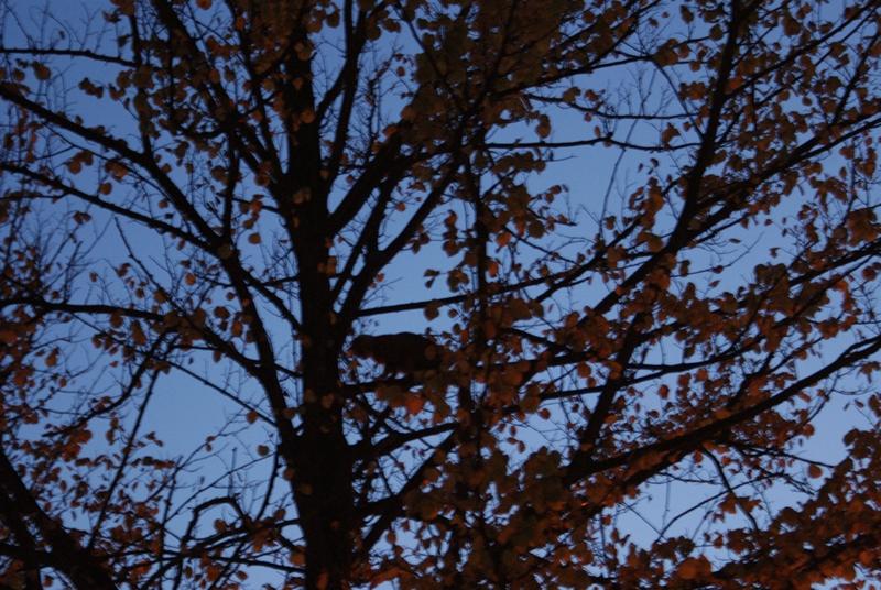 Kat in boom gered door klimmer *update*