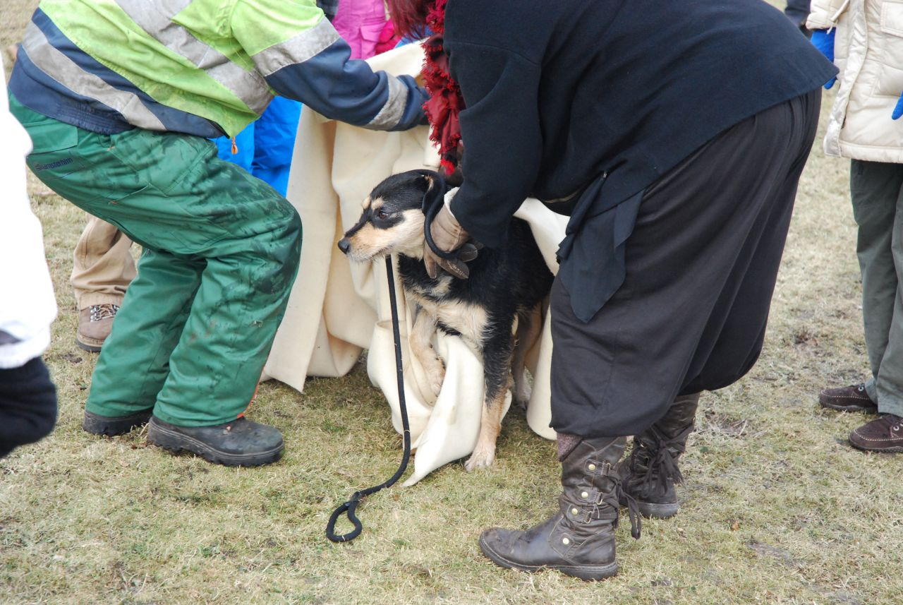 Hond gered van kanaal