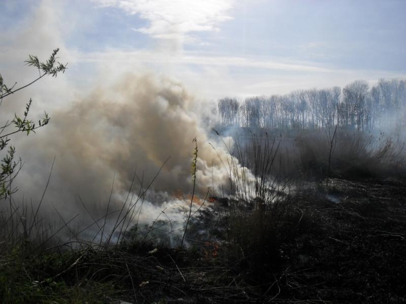 Rietbrand in Harlingen