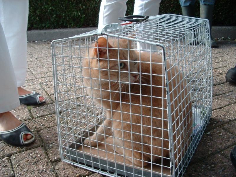 Kat gered na dagen in boom