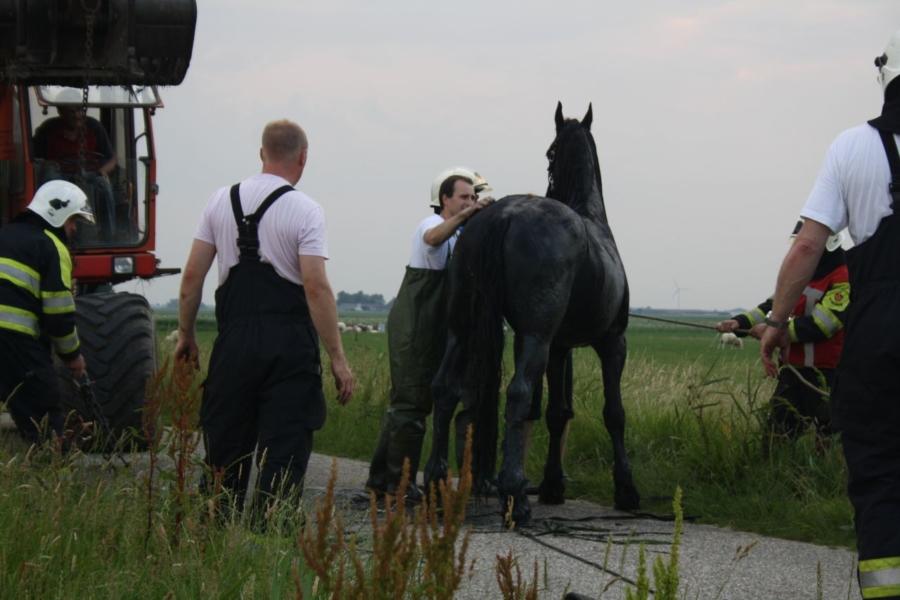 Paard in de sloot