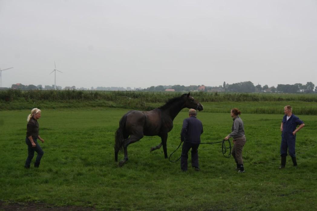 Paard in sloot