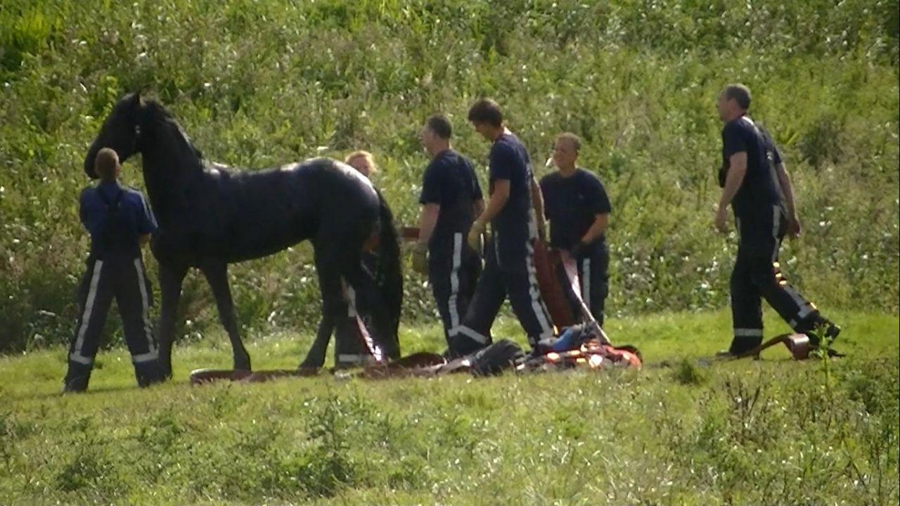 Paard gered door brandweer
