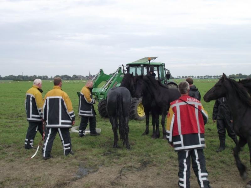 Fries paard uit sloot gered