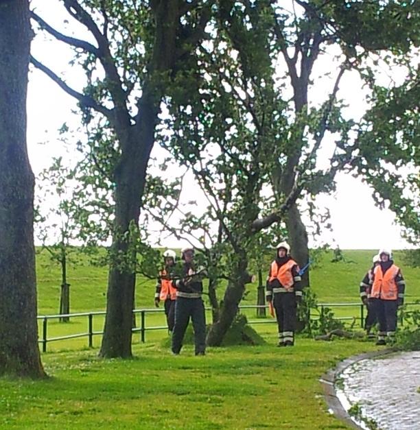 Bomen ontworteld door harde wind