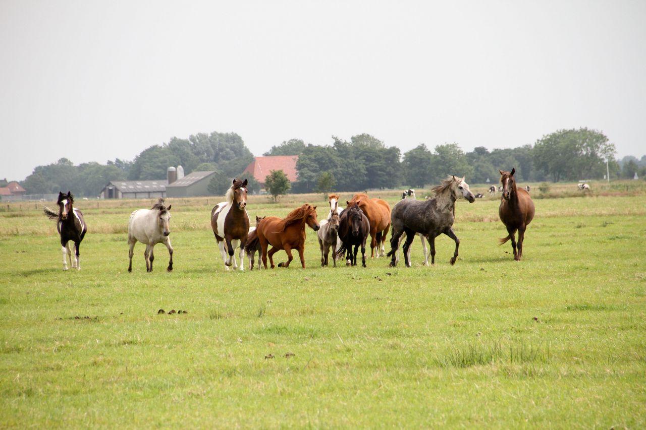 Paard gered dankzij hond