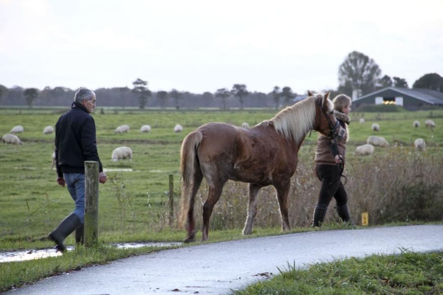 Paard verwond door veerooster