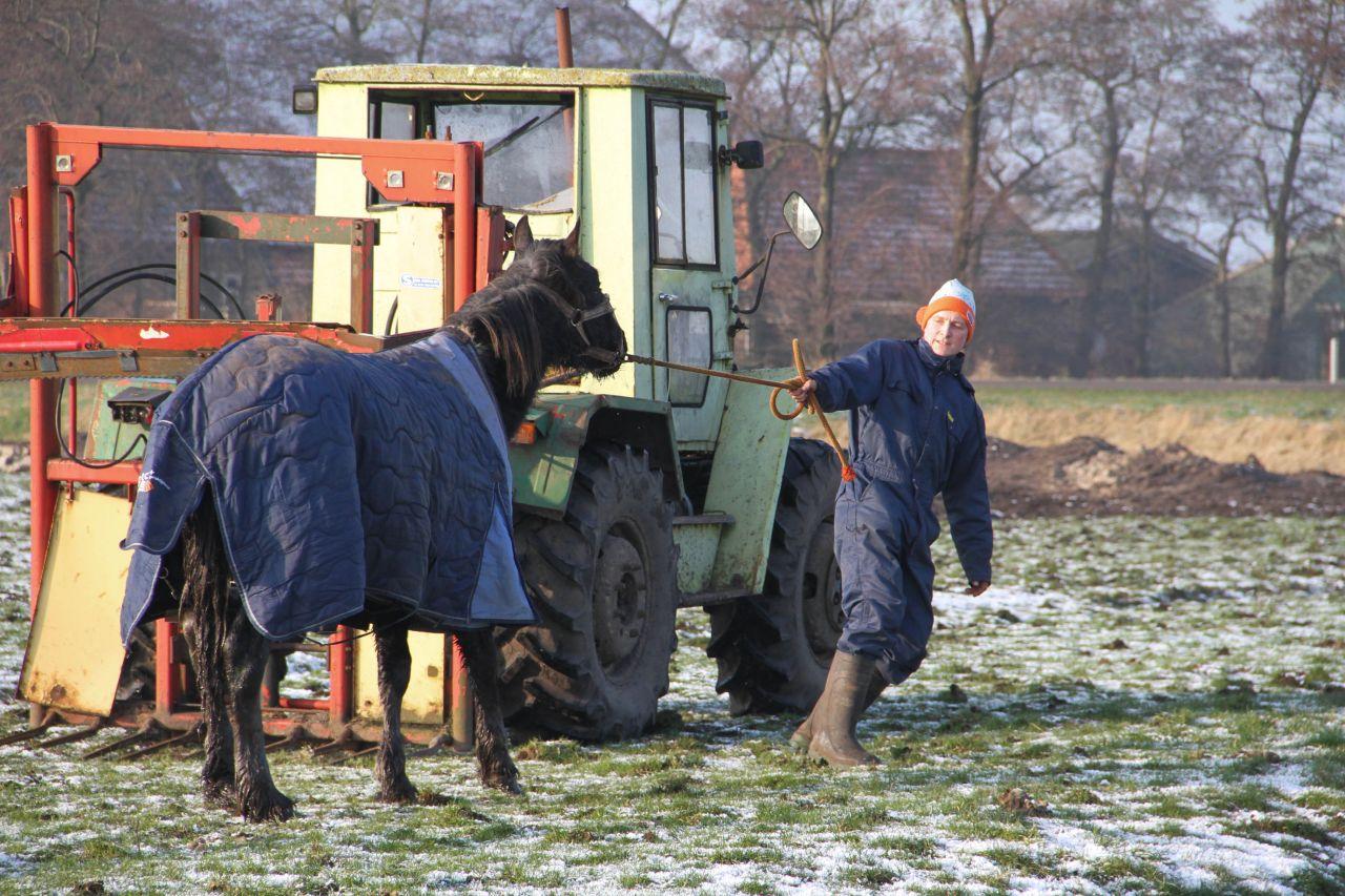 Paard Arthur door het ijs gezakt.
