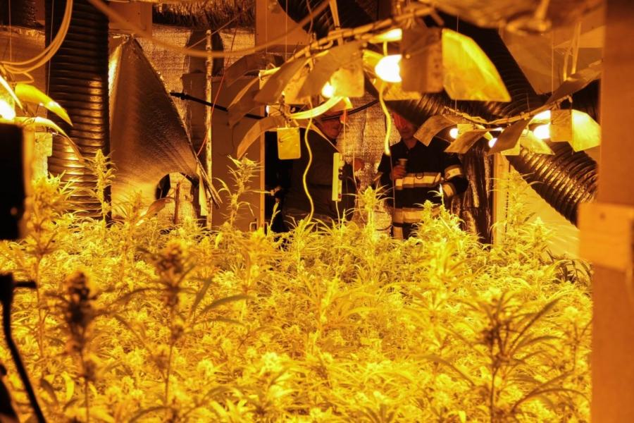 Opnieuw grote wietplantage in Friesland?
