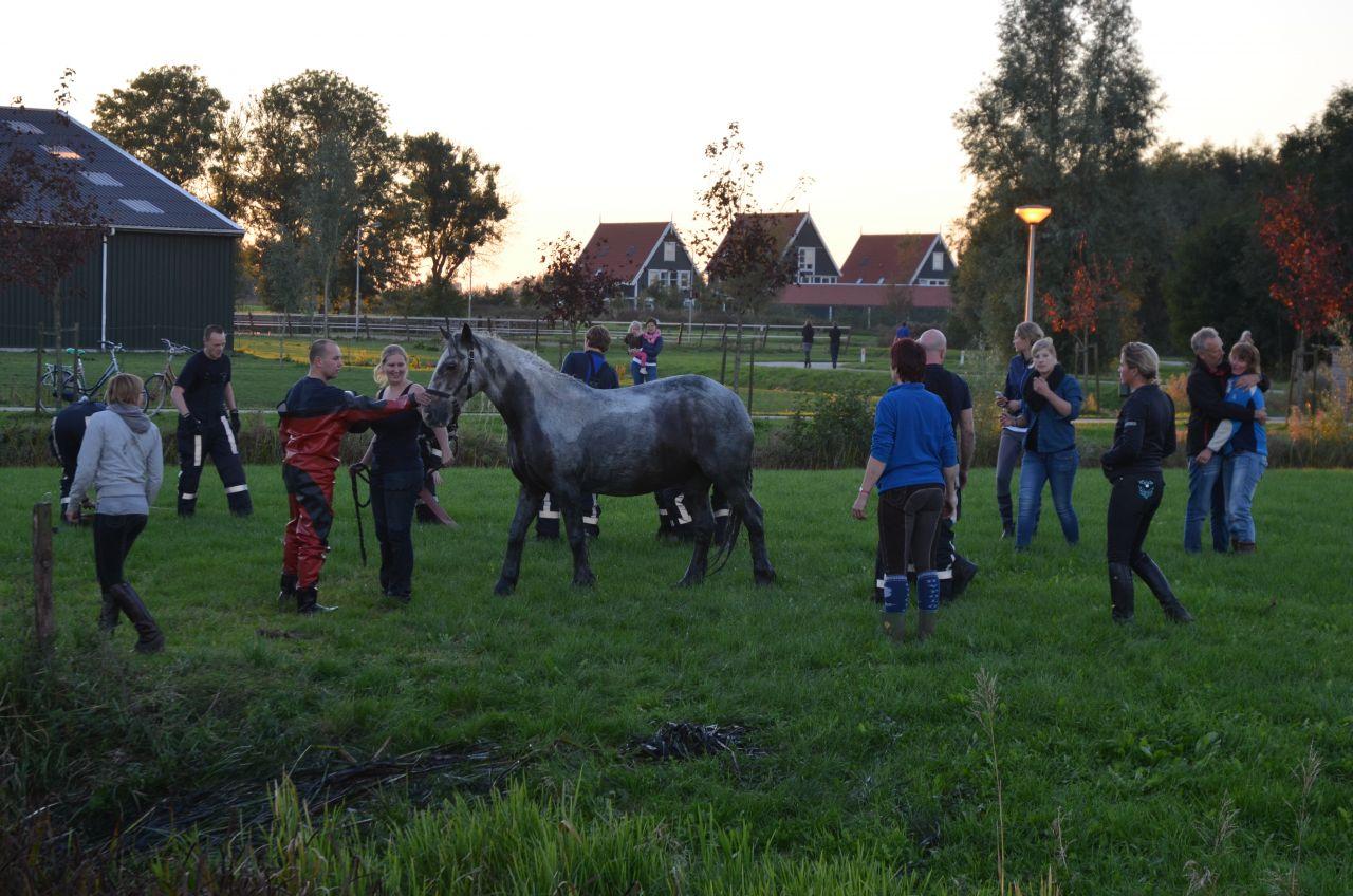 Paard uit sloot gered door brandweer en omstanders