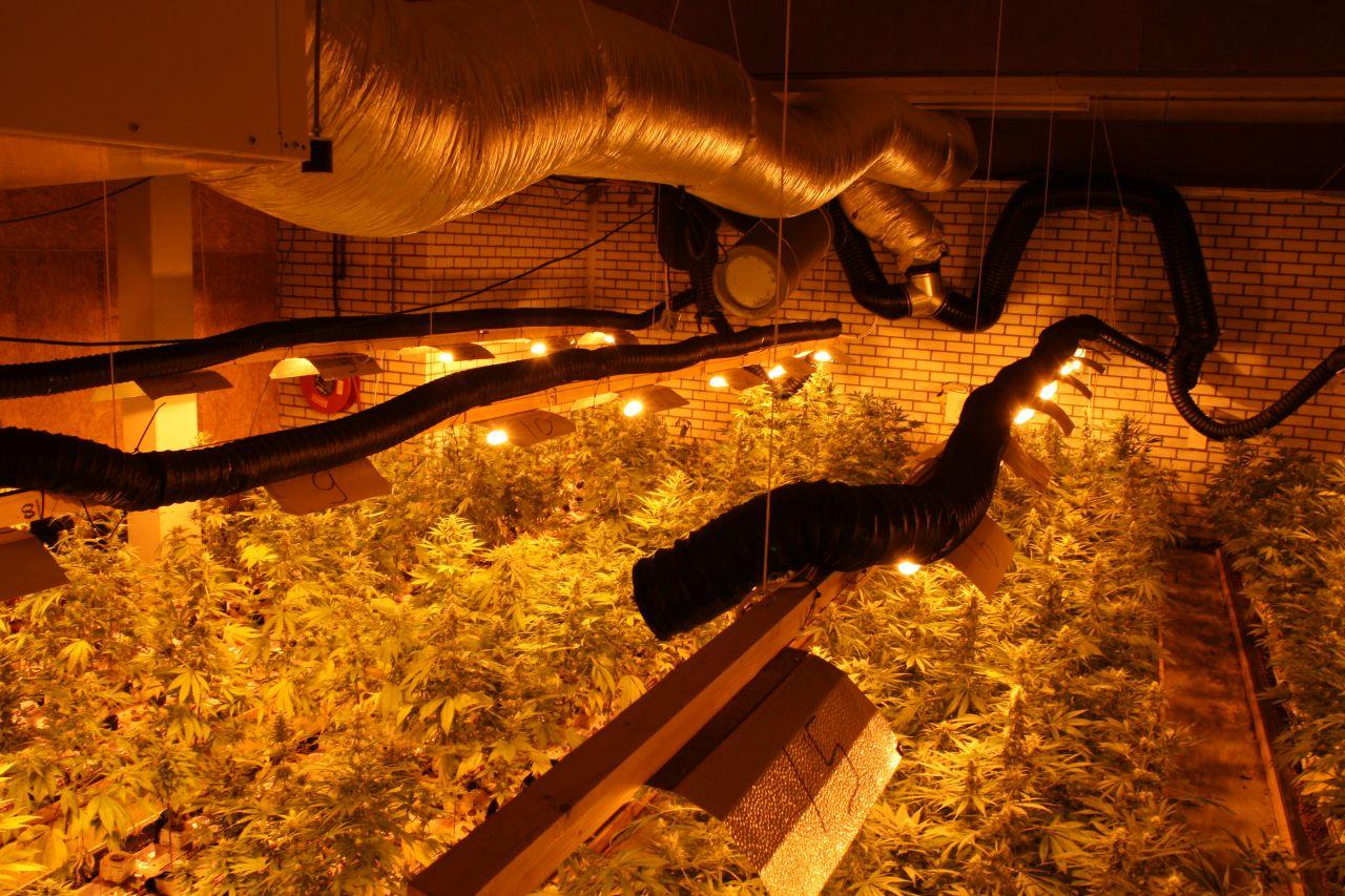 Kwekerij met 1300 planten ontdekt