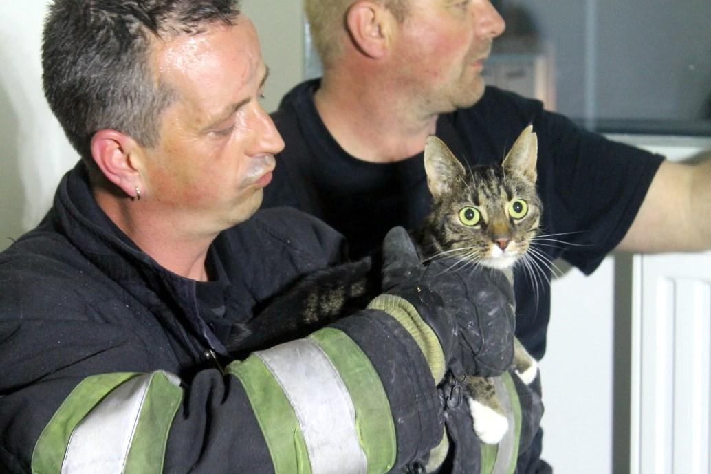 Harlinger brandweer bevrijdt kat