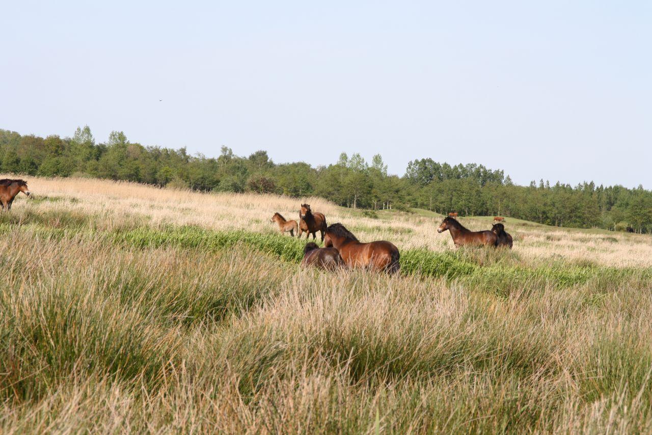 Opnieuw paard te water op het Alddiel