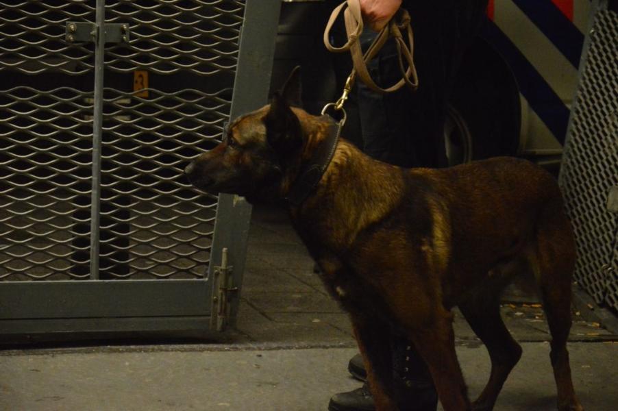 Oefening Friese politiehonden