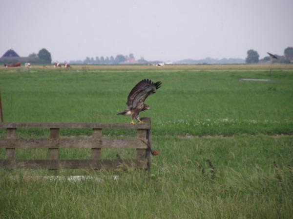 Bomen met nesten van roofvogels omgezaagd: getuigen gezocht