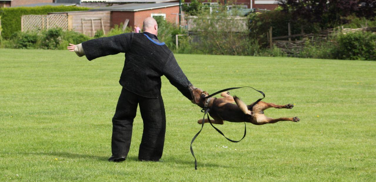 Spectaculaire politiehondenshow tijdens dorpsfeest