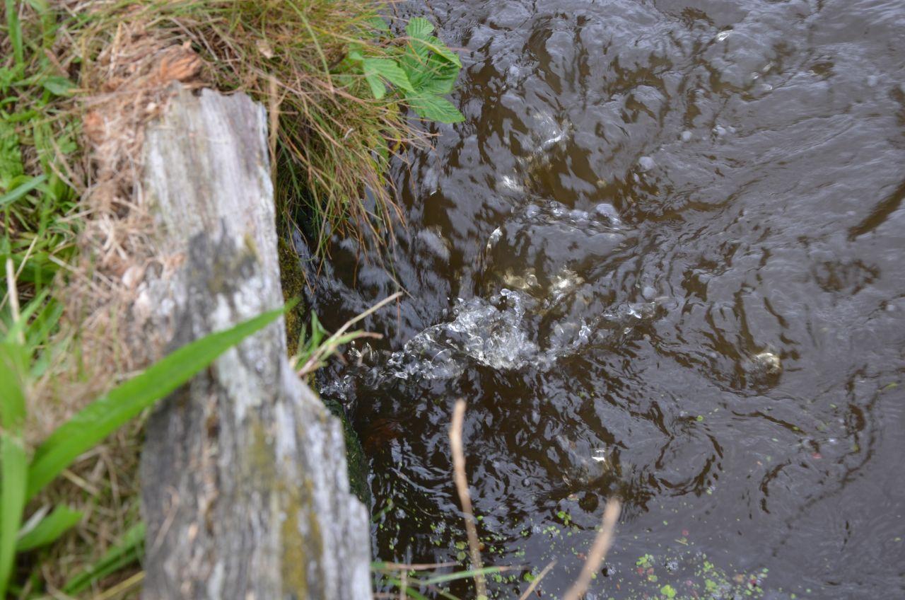 Gemeente past afwatering Froskepôlle niet aan