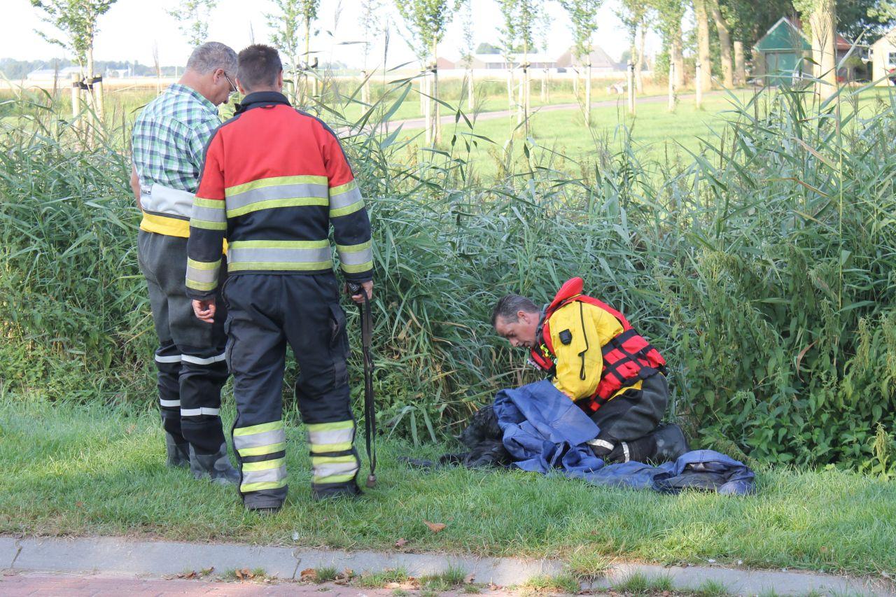 Brandweer redt hond uit water: brandweerman gebeten