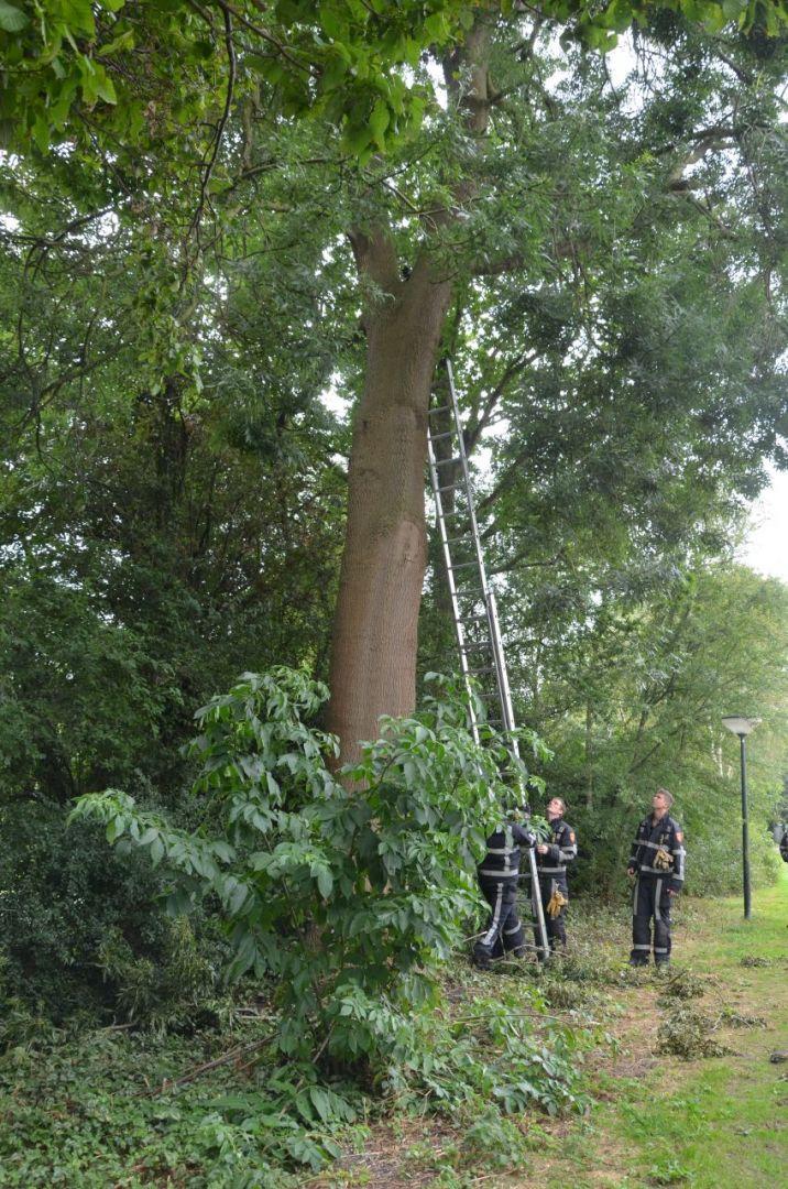 Kat uit boom gered door brandweer