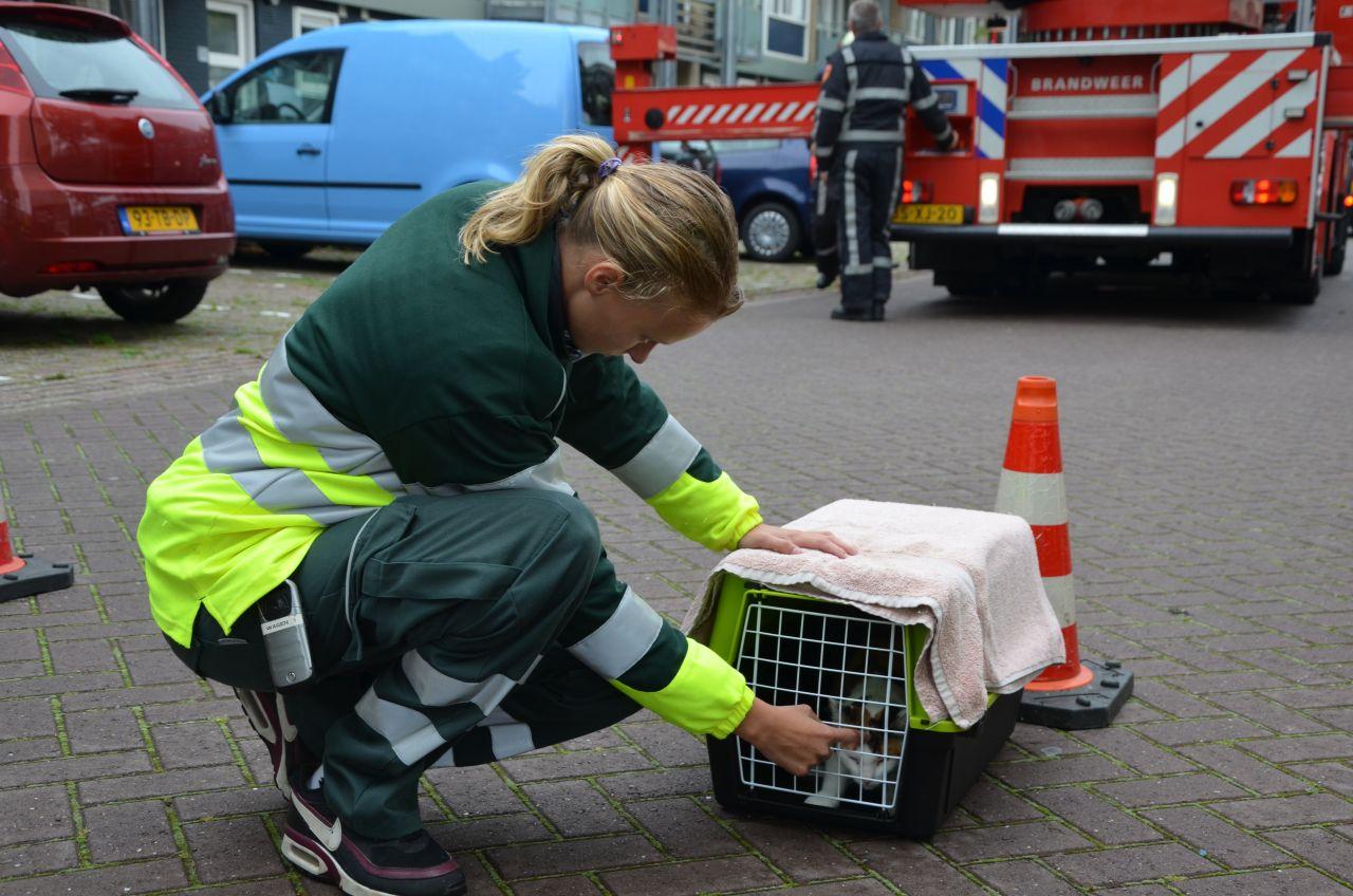 Brandweer en dierenambulance in actie voor kat