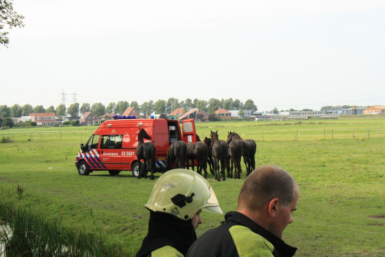 Brandweer en omstanders redden paard uit sloot