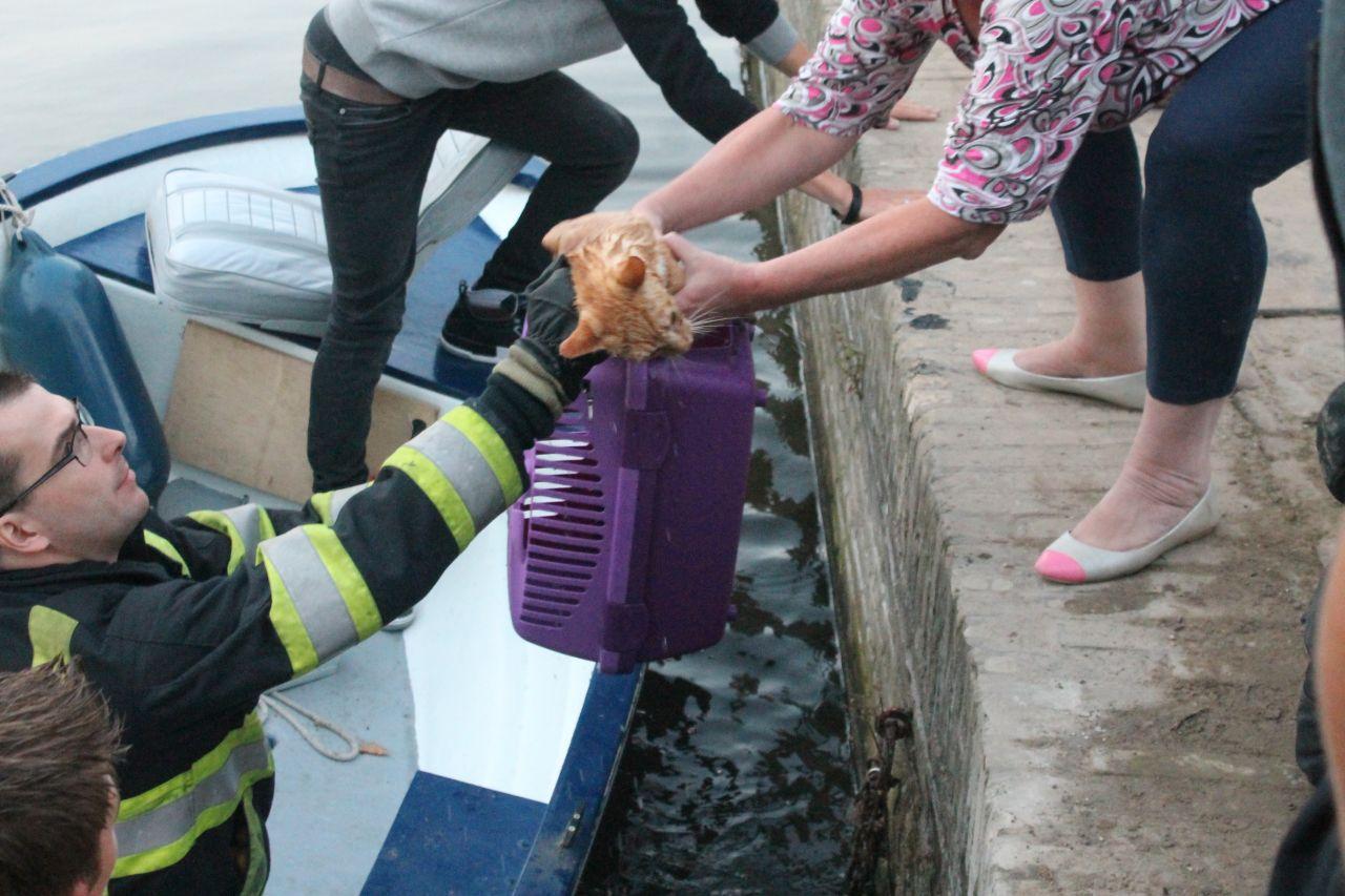 Brandweer ingezet voor kat in riool