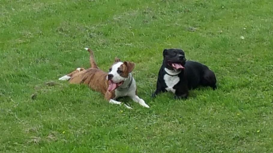Update: Hond gestolen bij Jumbo