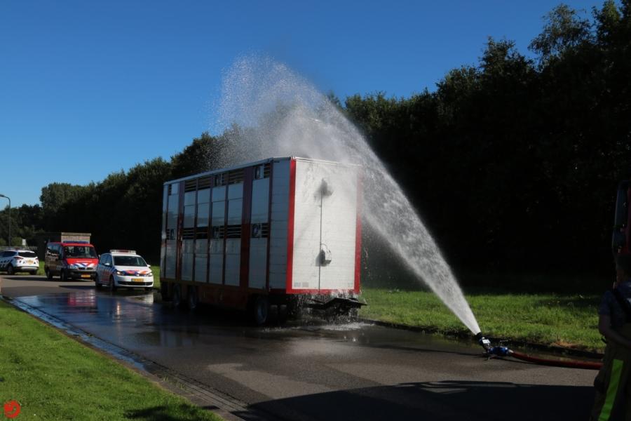 Brandweer helpt koeien in snikhete trailer