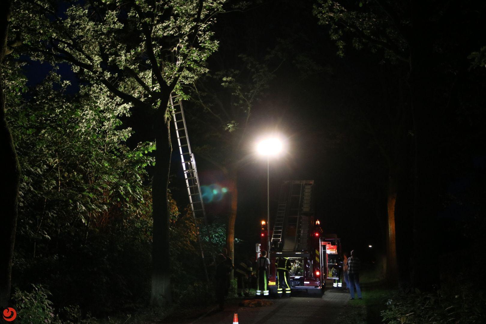 Brandweer ingezet voor kat in de boom