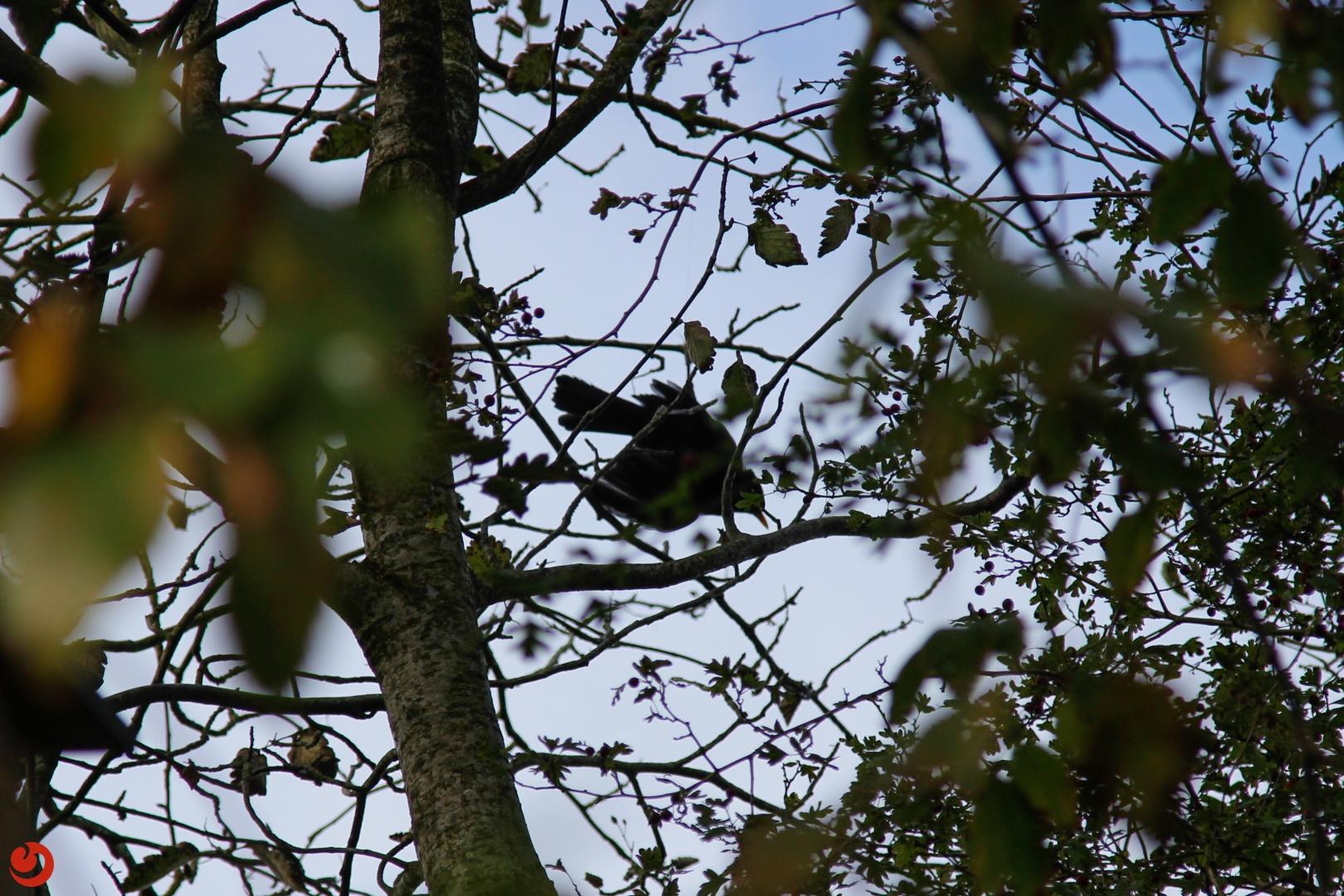 Vogel vast aan visdraad in boom