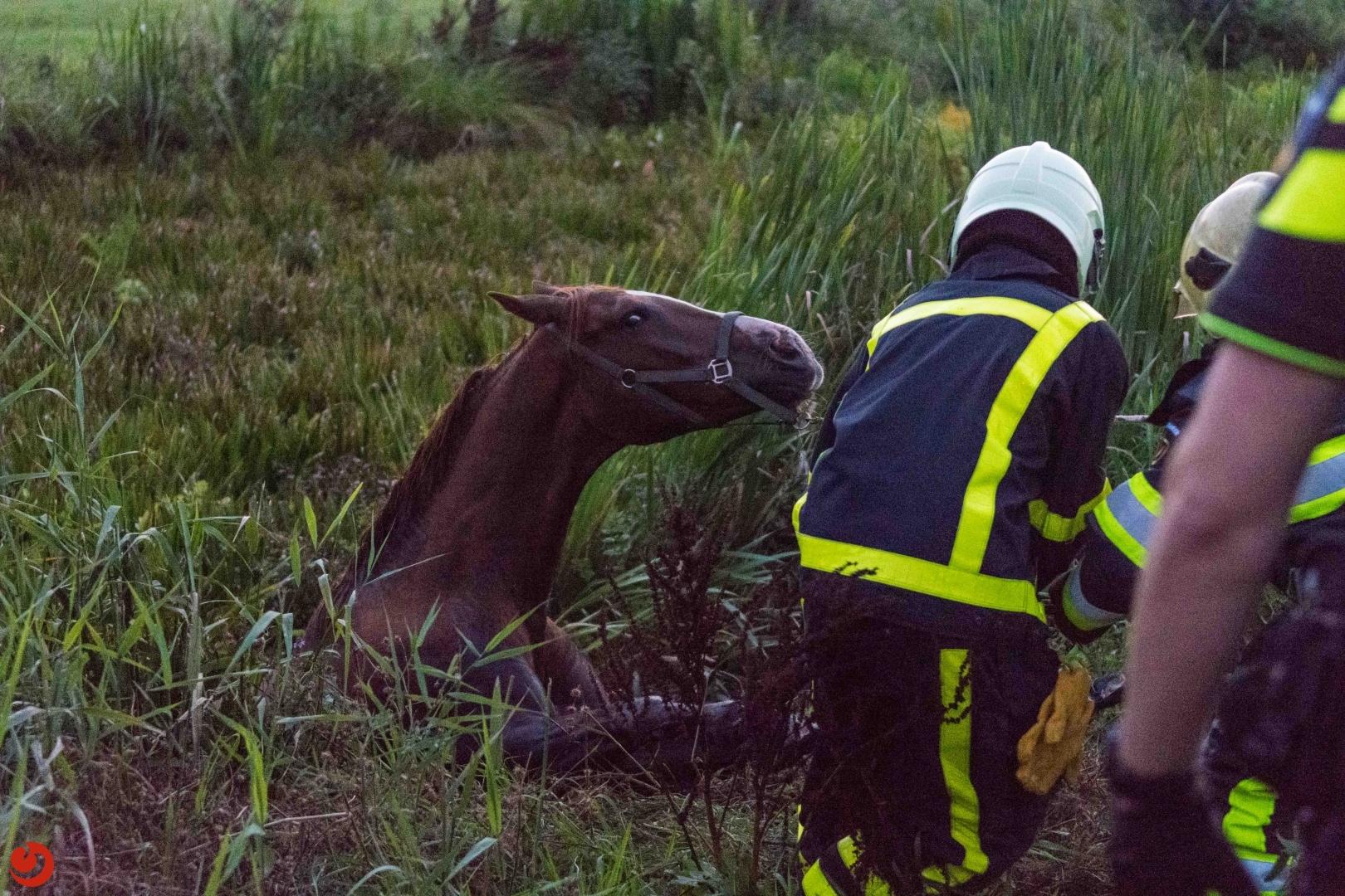 Brandweer helpt paard de sloot uit