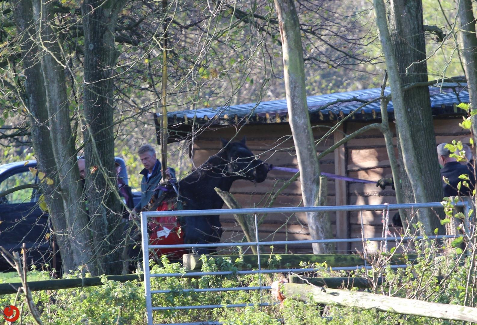 Paard uit water gered
