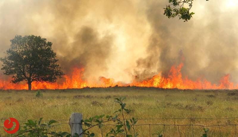 Grote brand verwoest deel natuurgebied